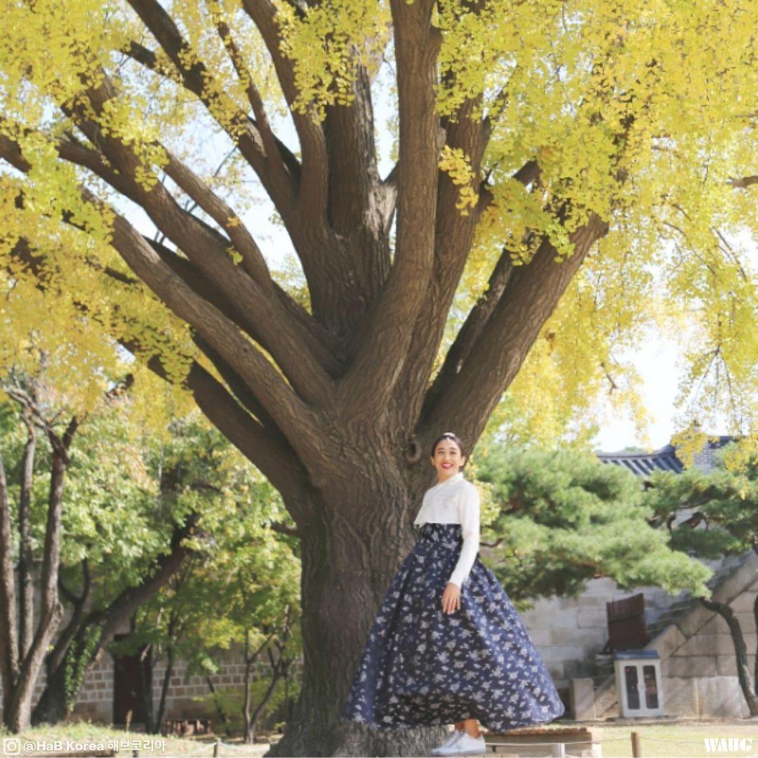 gyeongbokgung-palace-autumn-fall-5