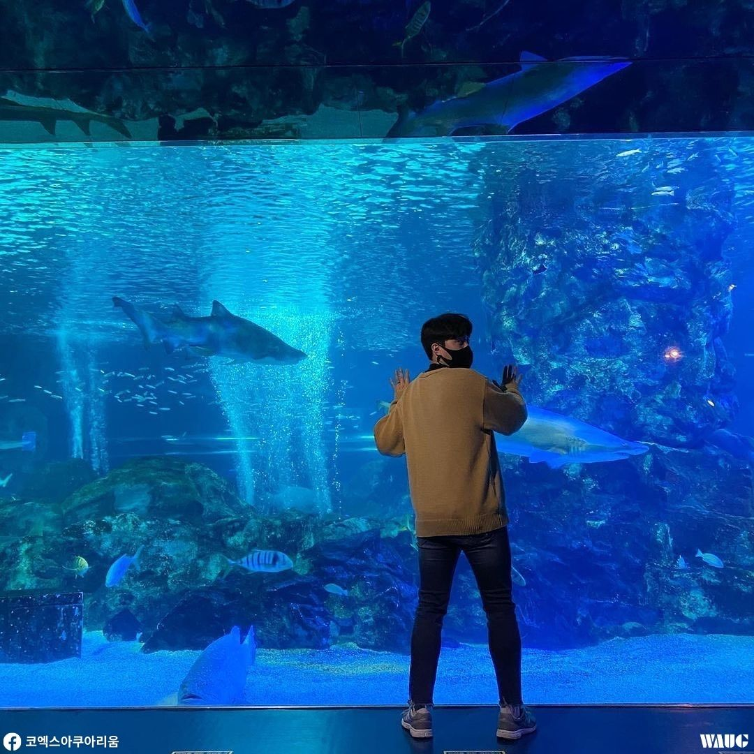 things-to-do-christmas-korea-coex-aquarium