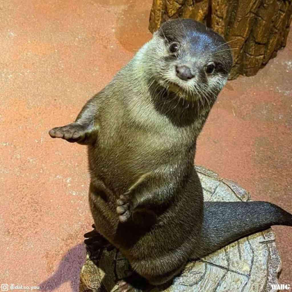 dubai aquarium & underwater zoo location review
