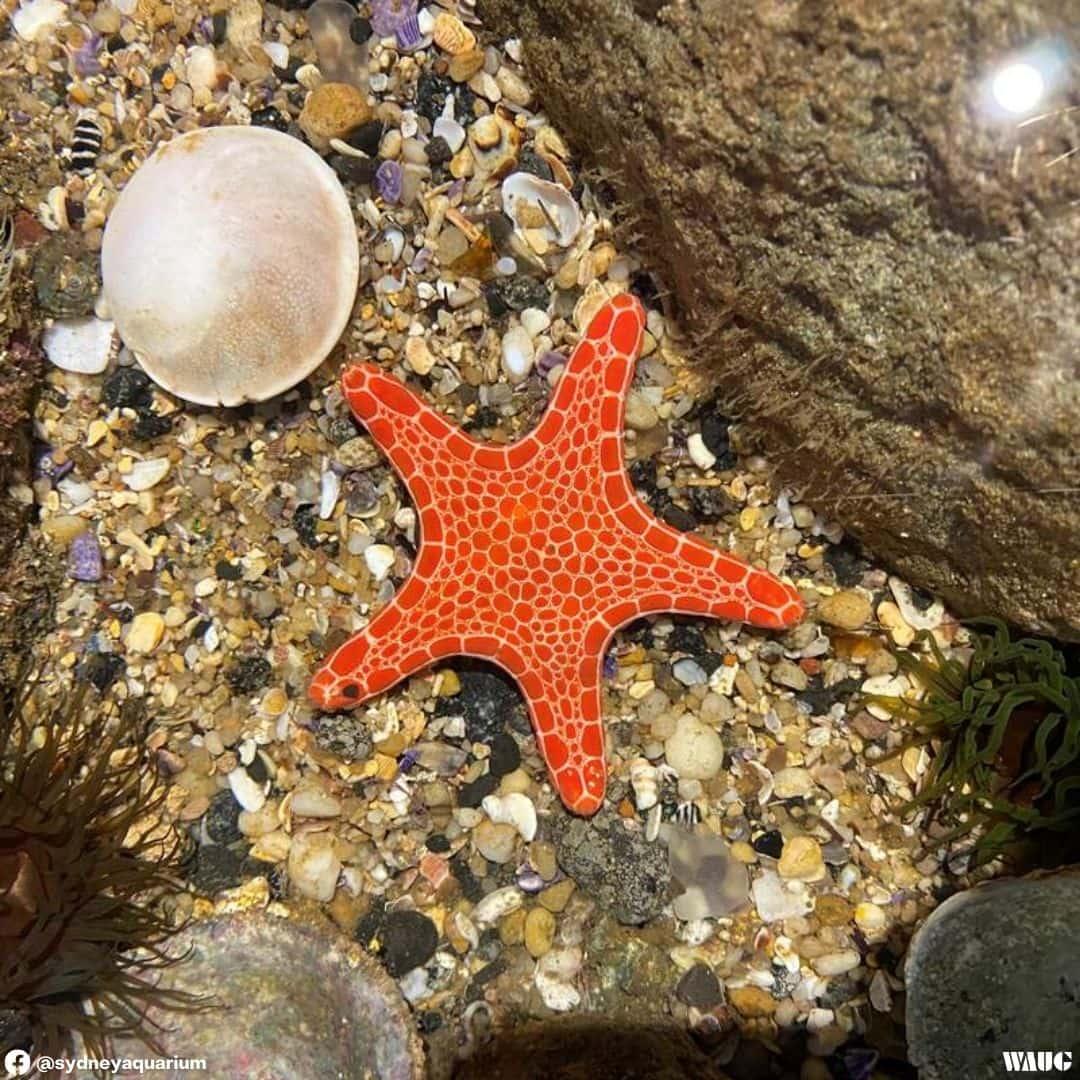 sea life sydney aquarium cost