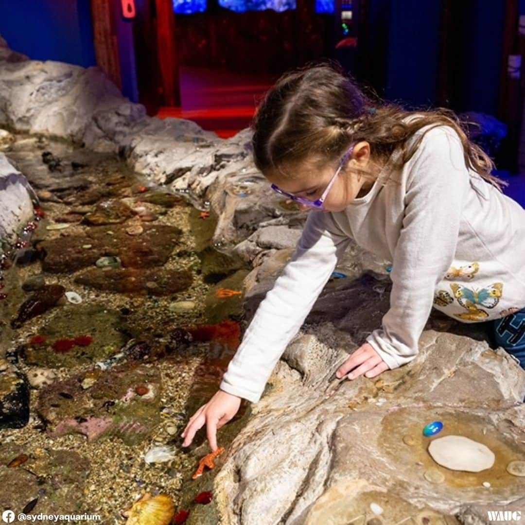 sea life sydney aquarium discount tickets