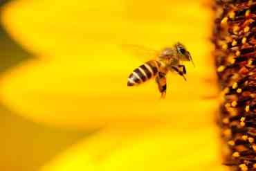 abeilles apiculture artisan