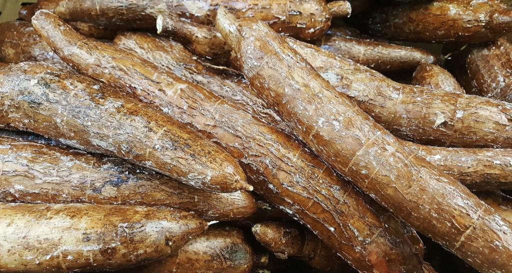 cassava to make flour