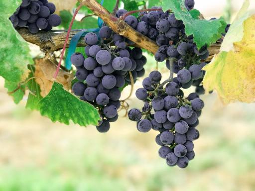 Raisins vs certain foods like grapes for weight loss