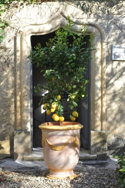 Anduze Pots Lemon Tree