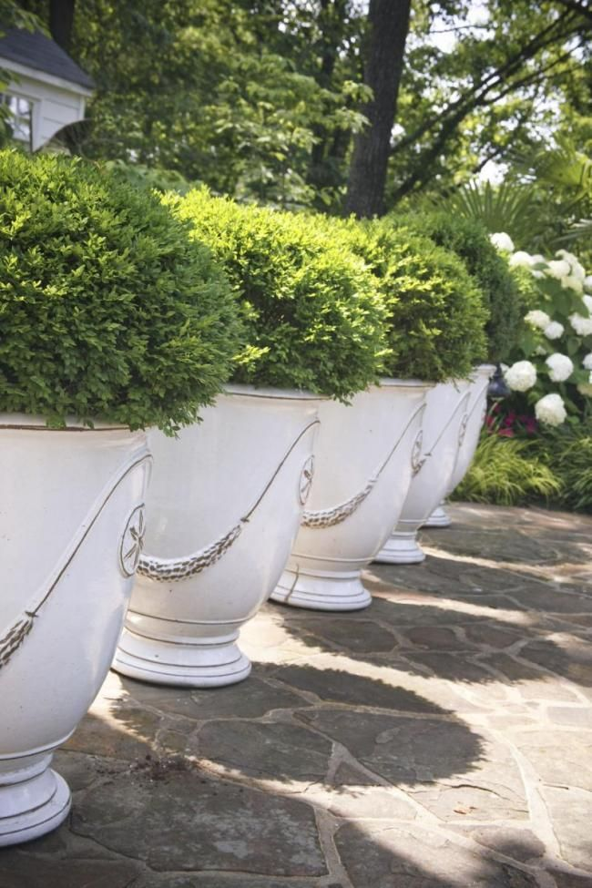 Anduze Pots In White With Boxwoord