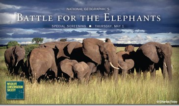 Battle for the Elephants Screening and Reception in Greenwich, CT – May 1, 2014 – Wildlife Conservation Society