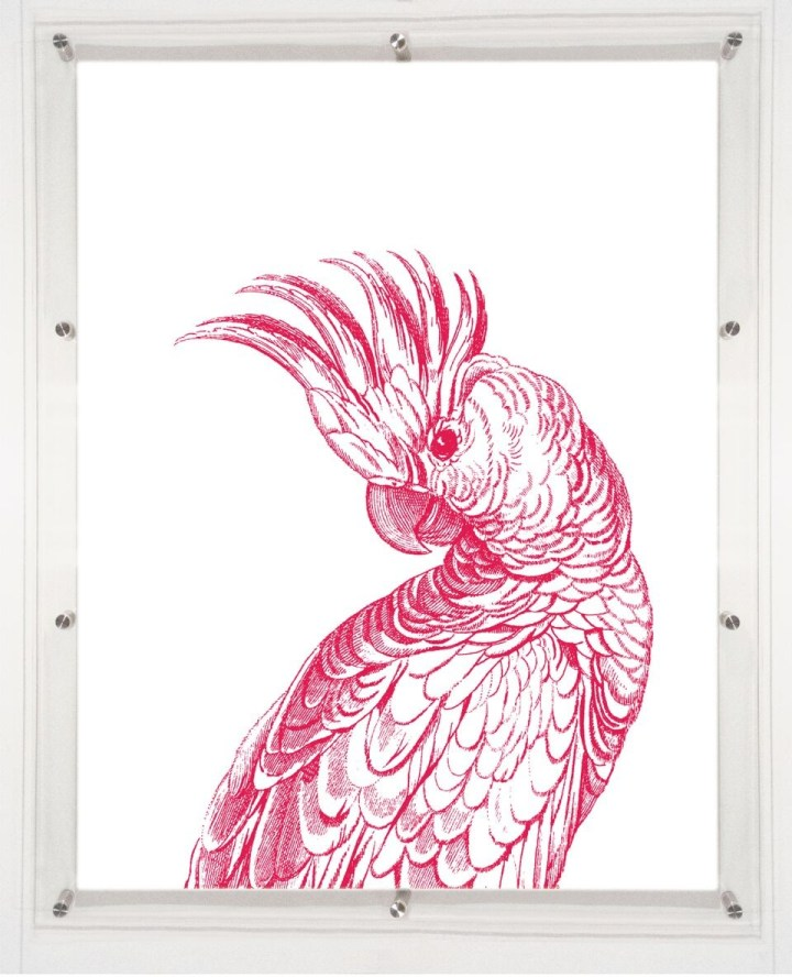 acrylic-framed-coocoo-bird-wall-art-print-1
