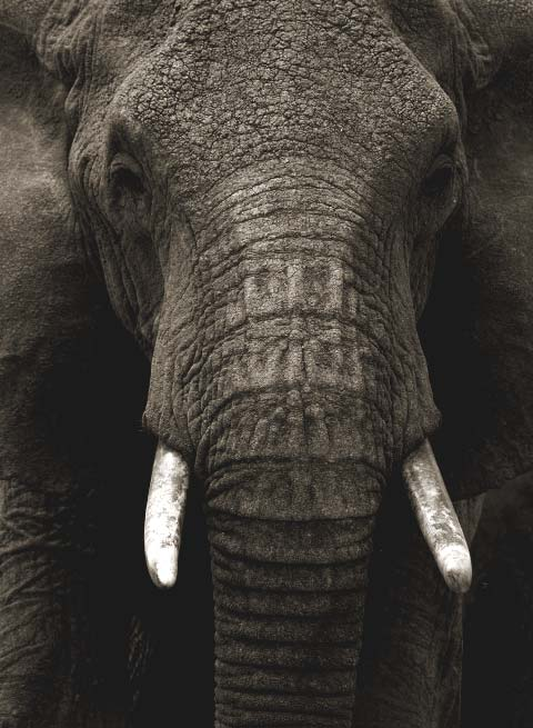donate-poster-elephant-499f90f2dc242d44be8143d78e355416