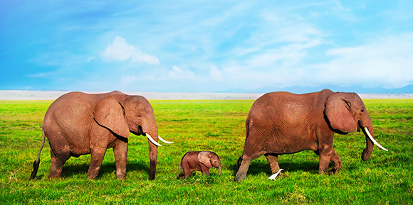 small_bg-elephants
