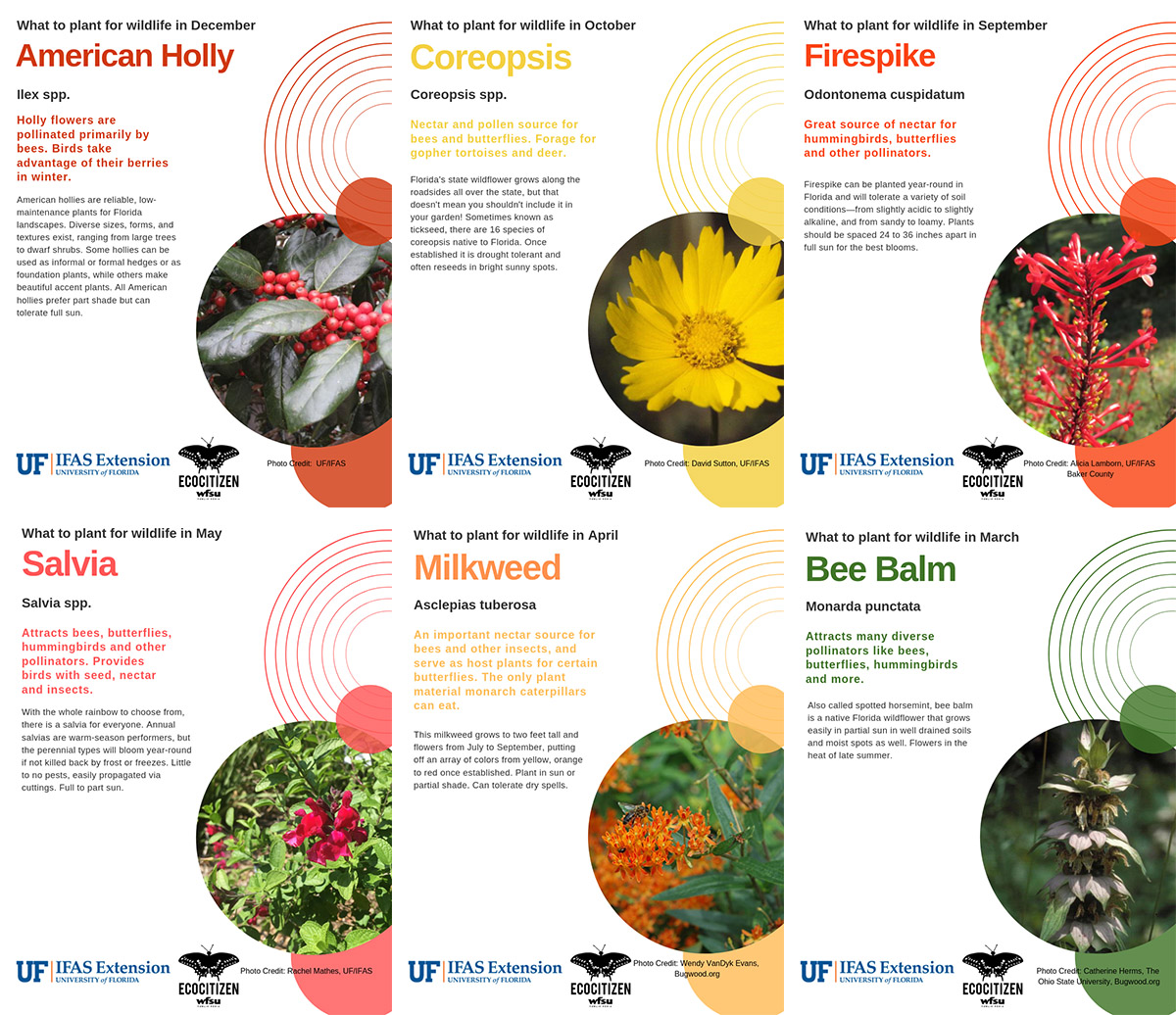 Florida Friendly Seasonal Planting Guide