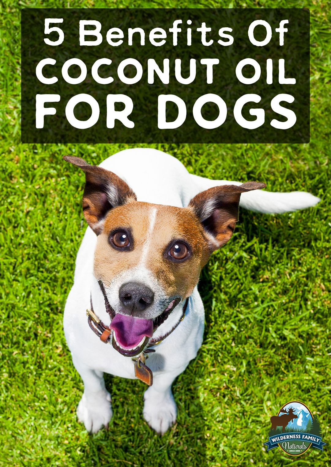 brush dog teeth with coconut oil