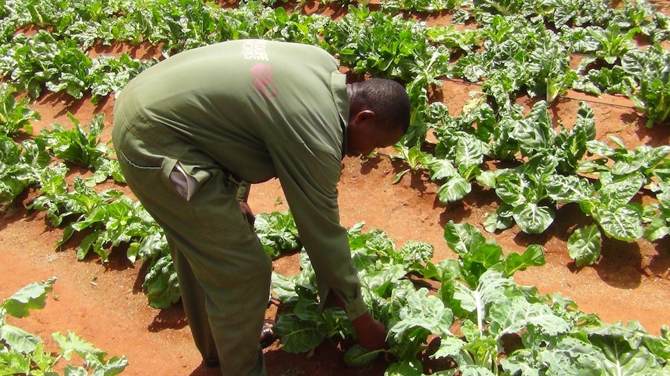 wildlife works green house- why wildlife works zuru kenya