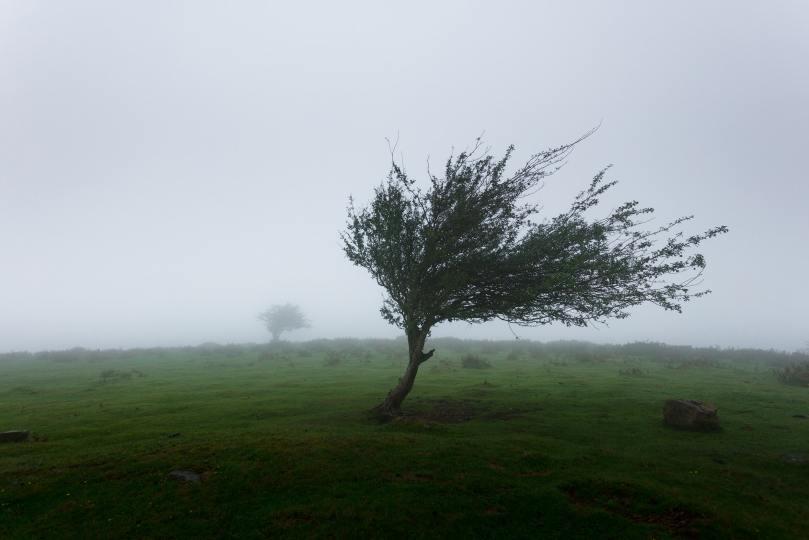 L'inclinaison des branches d'un arbre peut donner une bonne idée de la force du vent