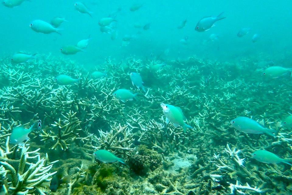 Marine corals reef restoration marine conservation coral reefs marine ecosystems marine life western indian ocean ocean science reef conservation
