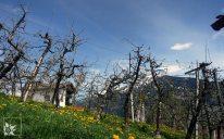 Streuobstplantage Stanz Tirol