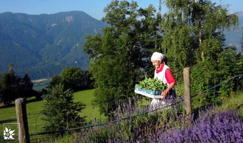 Bergbäuerin | Rosis Kräutergarten | Kärnten