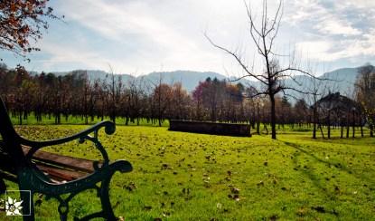 Blick zur Birnenplantage