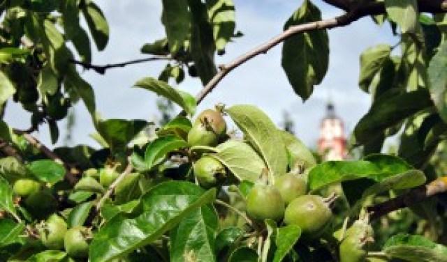 obstplantage-schnapsbrenner-hall-