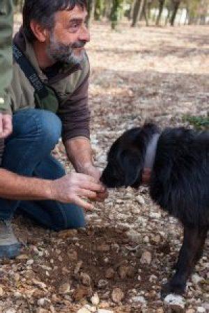 trueffelsucher-hund