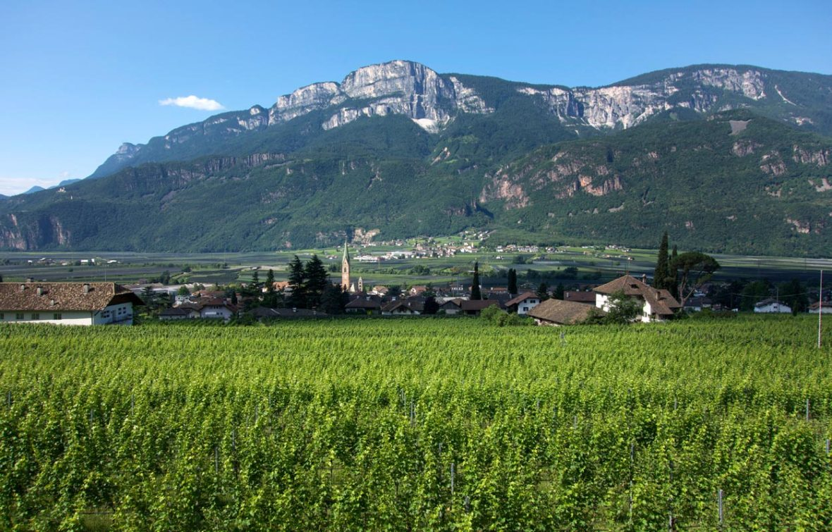 Blick auf Terlan - Südtirol