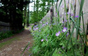 Blumen Vigiljoch Südtirol