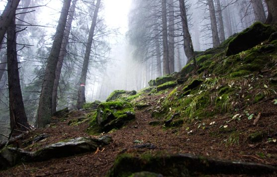 Aufstieg zur Falbesoner Nockalm | Stubai | Tirol