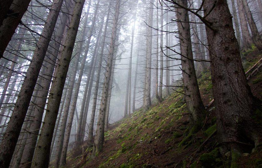 Nebelwald - Aufstieg zur Falbesoner Nockalm | Stubaital | Tirol