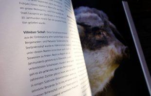 Das kulinarische Erbe der Alpen - Villnöser Schaf