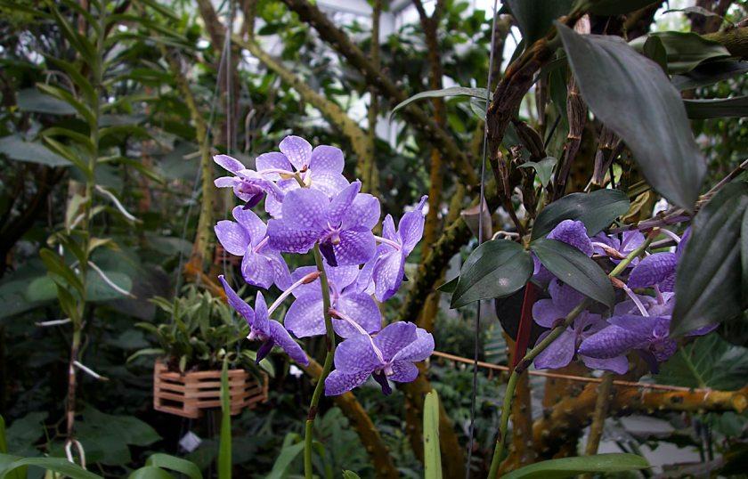 Orchideen - Gärten von Schloss Trauttmansdorff
