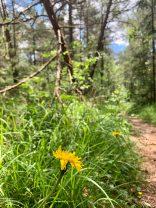 Auf den Pfaden des Naturschutzgebietes lässt sich allerhand entdecken.
