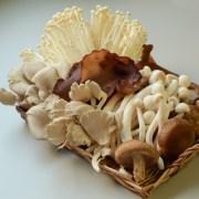綜合菇,金針菇,菇