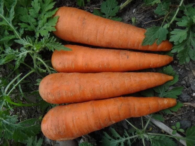 胡蘿蔔,紅蘿蔔