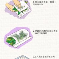 九層塔保存方法