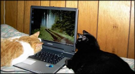 blog_computercat