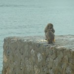 Monkeys going bananas!