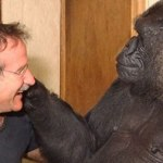 Wednesday Cute: Robin Williams and Koko