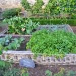 How Big Should My Garden Be?