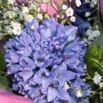15 Spring Flowers