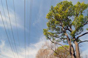 Arbor Day 2 - Utility Wires