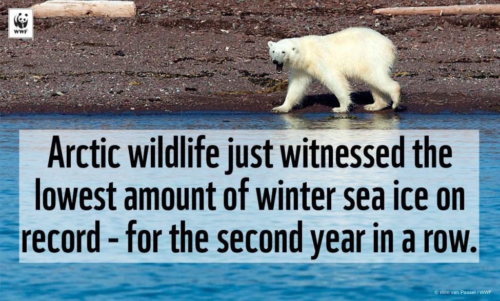 Arctic meme 2