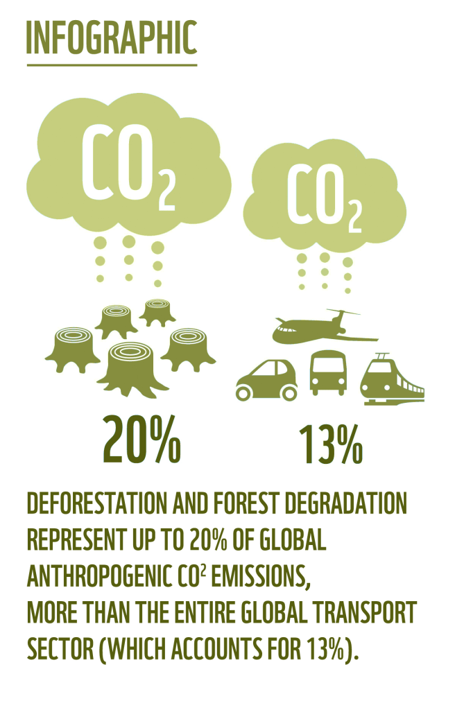 infographic_co2_deforestation