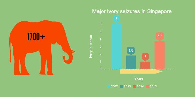 Elephant Ivory Singapore Infograph 2