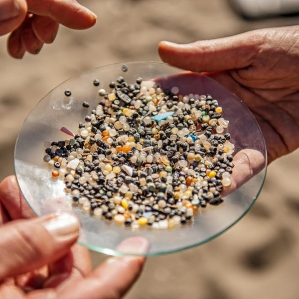 """""""I Trust My Body to Remove Undigested Plastic!"""" Top 10 Questions on Microplastics Answered"""