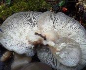平茸にできた苔グモのたまご