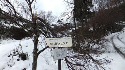 園入口の エゴノキ