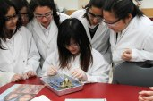 Finding the brain - Frog Dissection