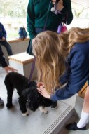 PuppyTherapy_01May2017-3796