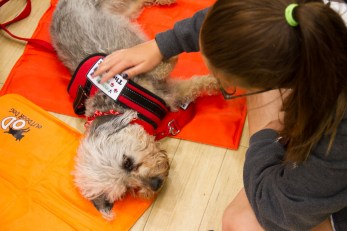 PuppyTherapy_09May2018-1098