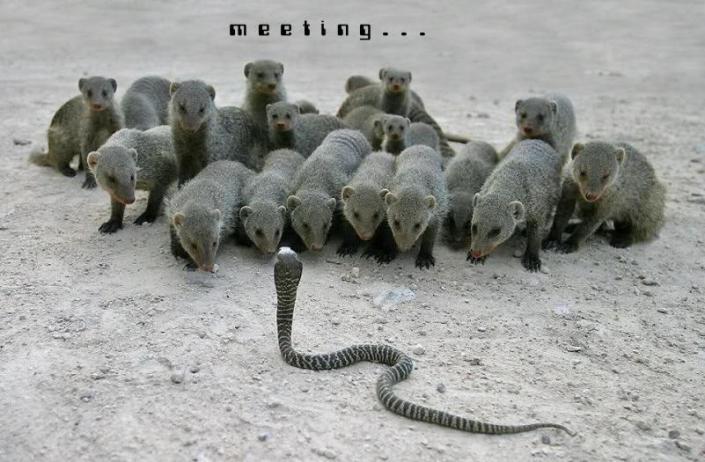 funny_team_meeting1